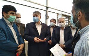 رئیس کمیسیون کشاورزی، آب، منابع طبیعی و محیط زیست مجلس شورای اسلامی: جنگلکاری در مهران نمونه جذابی از نهال کاری در مناطق کویری است