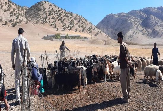 به مناسبت بزرگداشت هفته دفاع مقدس برگزار گردید؛ برگزاری اردوهای جهادی در قالب خدمات رسانی رایگان به دامداران